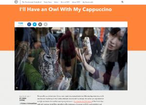 Owl Cafe of Japan